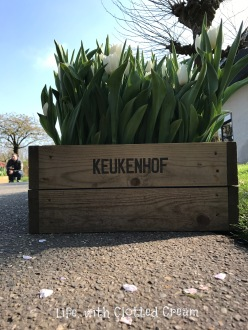 A wooden flower box at Keukenhof