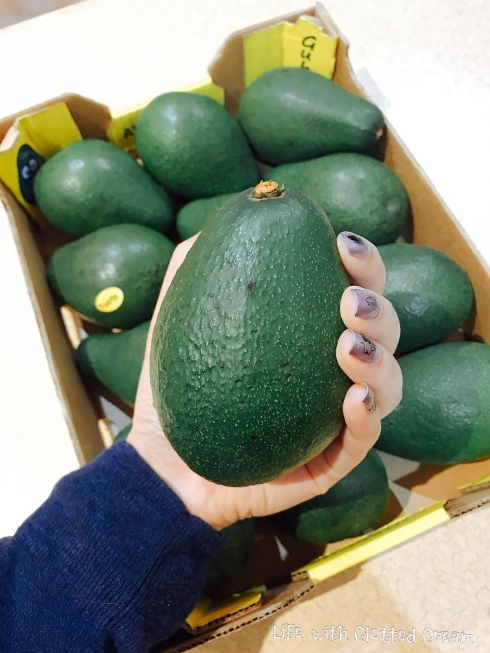 Giant avocados!