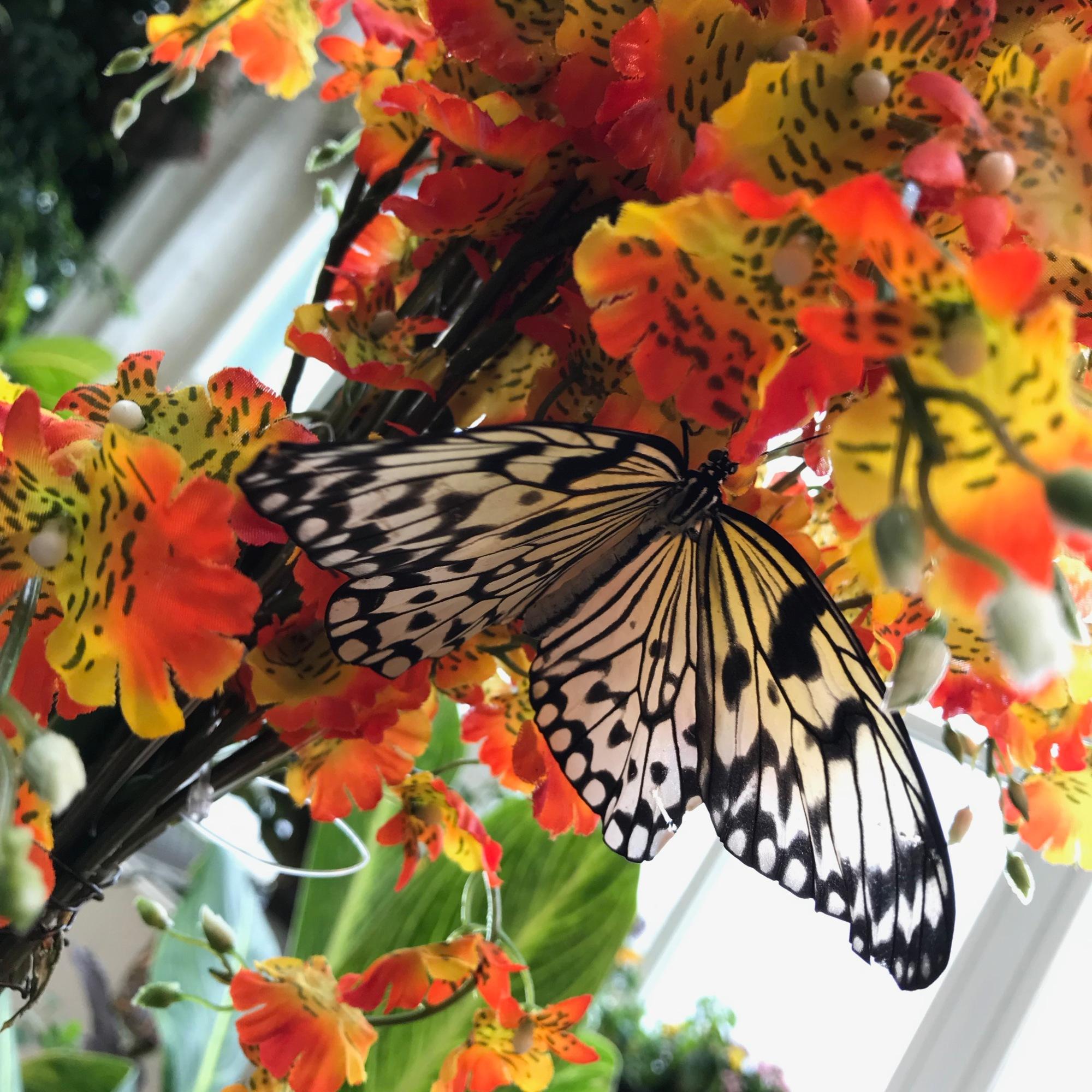 Schmetterling Haus