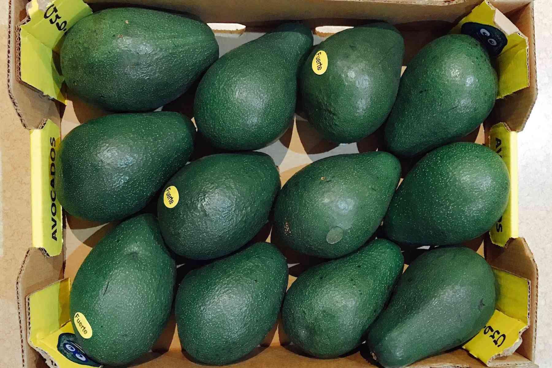 A box of Fuerte Avocados