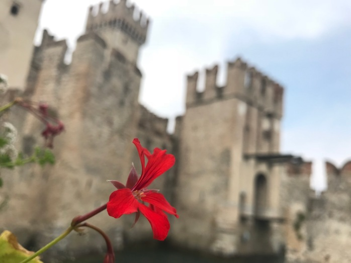Red flower outside Sirmione Castle